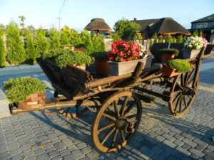 Wóz – Myśliwska Szczecha /fot. K. Łabędzka